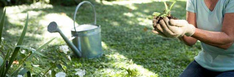 mantenimiento del jardin